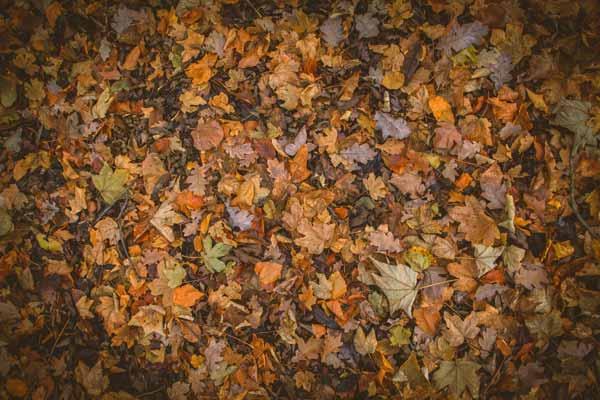 dead leaves in a pile - premises liability lawsuits