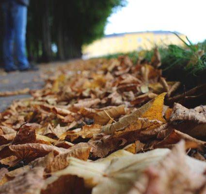 slip and fall leaf injury lawyer